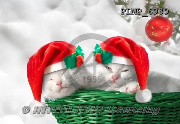 Marek, CHRISTMAS ANIMALS, WEIHNACHTEN TIERE, NAVIDAD ANIMALES, photos+++++,PLMP6989,#XA# cat  santas cap,