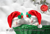 Marek, CHRISTMAS ANIMALS, WEIHNACHTEN TIERE, NAVIDAD ANIMALES, photos+++++,PLMP6989,#XA# cat  santas cap,