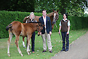 16/06/14 ***FREE PHOTO FOR EDITORIAL USE***<br /> <br /> The inaugural Goffs Summer Sale at Kensington Palace, London, saw the first ever sale of a Frankel foal that was sold to MV Magnier for £1,150,000.<br /> <br /> <br /> <br /> <br /> All Rights Reserved: F Stop Press Ltd. +44(0)1335 300098   www.fstoppress.com.