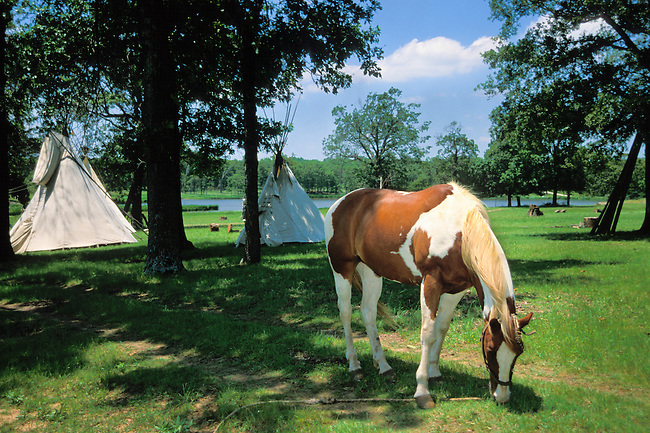 On the grounds of the Woolaroc Museum are natural habitats for wild animals such as deer, elk and bison. Here a paint horse grazes on a lush meadow where 2 tepee's have been erected in Osage Territory near Bartlesville Oklahoma
