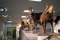 Liechtenstein  Vaduz  June 2008.National  Museum.The Natural history of the Liechtenstein.