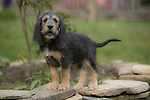Otterhound Shopping cart has 3 Tabs:<br /> <br /> 1) Rights-Managed downloads for Commercial Use<br /> <br /> 2) Print sizes from wallet to 20x30<br /> <br /> 3) Merchandise items like T-shirts and refrigerator magnets