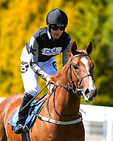 Rumble in the Jungle ridden by Tom Queally goes down to the start  of The Penang Turf Club Malaysia Novice Stakes (Plus 10 Race) (Class 4 during Afternoon Racing at Salisbury Racecourse on 17th May 2018