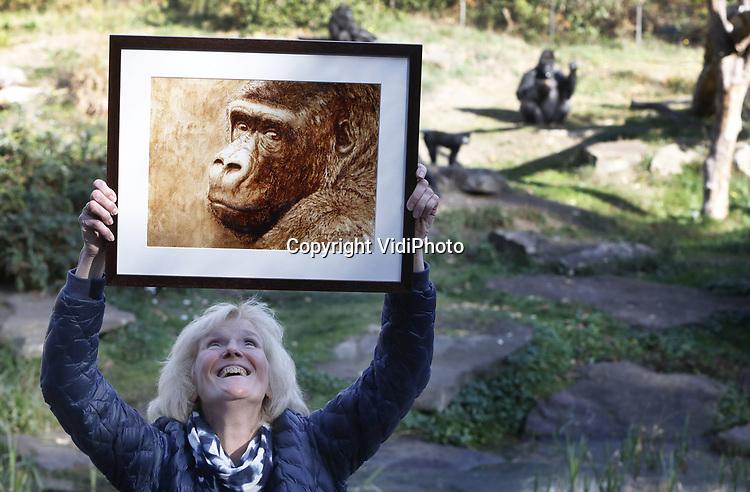Foto: VidiPhoto<br /> <br /> APELDOORN - Dertien jaar geleden kwam hij als jonge puber en onervaren leider naar Apenheul: gorilla Jambo. Inmiddels weegt hij 200 kilo, is hij vader van acht kinderen en &eacute;&eacute;n van de iconen van Apenheul. Vrijdag was er een bijzonder afscheidsmoment voor het publiek, waarin verzorgers terugblikten op dertien jaar leiderschap van Jambo. De zilverrug is nog tot 4 november te zien in de Apenheul. Dan maakt hij plaats voor zijn opvolger Bao Bao. Jambo vertrekt tijdens de wintersluiting met drie zonen naar Al Ain Zoo in de Verenigde Arabische Emiraten. Het vertrek heeft alles te maken met het internationale fokprogramma voor gorilla&rsquo;s. De afgelopen jaren heeft Jambo voor acht kinderen gezorgd. Zijn genen zijn daarmee goed vertegenwoordigd onder de populatie gorilla&rsquo;s in dierentuinen. Ook moet inteelt in de groep worden voorkomen. Foto: Kunstenares Gonny van de Weerd schilderde een portret van Jambo met koffiedrab uit de Apenheul.