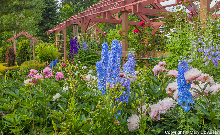 Vashon Island, WA: Flower bed with rose pergola with colorful blooms of peonies and delphiniums in Froggsong garden in summer