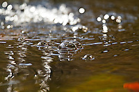 Abstract and semi abstract image compositions focused on water and liquids in motion.