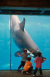 Young kids at the San Diego Sea Word Aquatic Park touching glass of the underwater aquarium playing with a killer whale orca San Diego California USA
