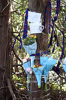 """Pictured: Flowers messages and school uniform ties left as tributes by trees outside Olchfa Comprehensive school on Gower Road in the Sketty area of Swansea, where the body of a 15 year old pupil was discovered.<br /> Re: A 17-year-old girl has been arrested on suspicion of making a """"grossly offensive"""" comment on Facebook after the sudden death of a boy in Swansea.<br /> The girl from south Wales was questioned on Saturday before being released on police bail.<br /> The teenage boy, whose body was found in woods near Hendrefoilan student village, has been named locally as Olchfa school pupil James Lock, 15.<br /> His body was found on Thursday and his death is being treated as unexplained.<br /> South Wales Police said they were not looking for anybody else in connection with the Facebook allegation."""