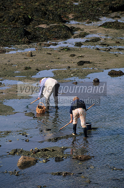Europe/France/Bretagne/29/Finistère/Kerity: Pêcheurs à pieds