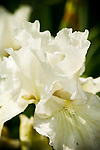 Huntington Library, Pasadena, California, Florals, Desert, Cactus, Japanese Gardens, Spring is here!