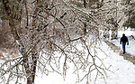 BETHLEHEM,  CT-012119JS12-Ice clings to the branches of trees at the Flanders Nature Center in Woodbury. Jim Shannon Republican American