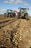 Harvesting Pentland Dell potatoes, yielding 18 tonnes per acre, on G. A. Robson's New Manor Farm, Carlton Husthwaite, Thirsk, North Yorkshire.