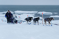 Jessie Royer comes off of the sea ice with open water and icebergs in the backgroud as she makes her way onto Nome's Front Street and heading towards the finish line to place 3rd in the 2019 Iditarod sled dog race.<br /> <br /> Photo by Jeff Schultz/  (C) 2019  ALL RIGHTS RESERVED
