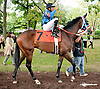 Royal Runner before The First State Dash at Delaware Park on 9/14/13
