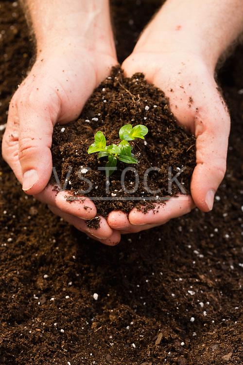 Man holding seedling