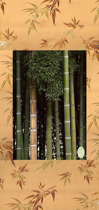 Bamboo Thicket at Halla Arboretum, Jeju Island, South Korea. Giclee and satin brocade.