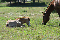 Mares and their foals on South Farm