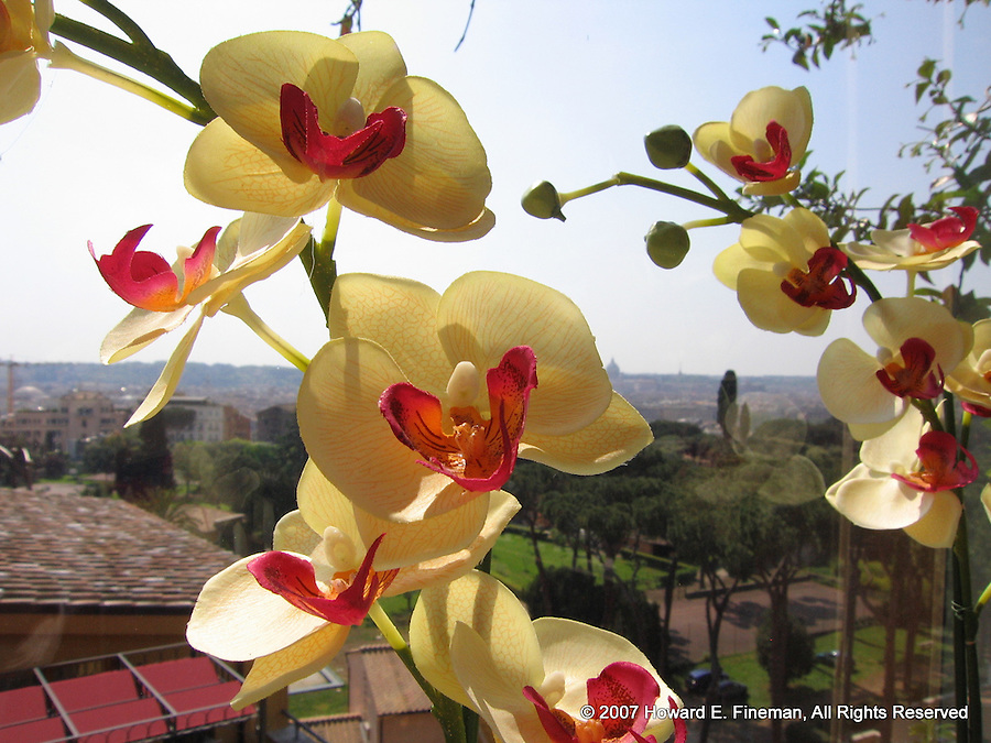 Orchids over Rome