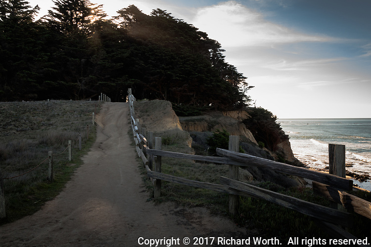 In the shadow of the cypress trees, a path leads up and away, into the depths of the cypress grove  on the bluff at Fitzgerald Marine Reserve on California's Pacific coast.