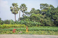 Vegetable farmers tend to their crops in Machahi village, Muzaffarpur, Bihar, India on October 26th, 2016. Non-profit organisation Technoserve works with women vegetable farmers in Muzaffarpur, providing technical support in forward linkage, streamlining their business models and linking them directly to an international market through Electronic Trading Platforms. Photograph by Suzanne Lee for Technoserve
