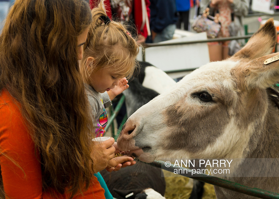 Merrick, New York, USA. 13th September 2014. A toddler girl and parent feed sheep and a donkey at the Petting Zoo at the 23rd Annual Merrick Fall Festival & Street Fair in Lsuburban ong Island.