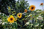 8.6.18 - Sunshine Idaho...