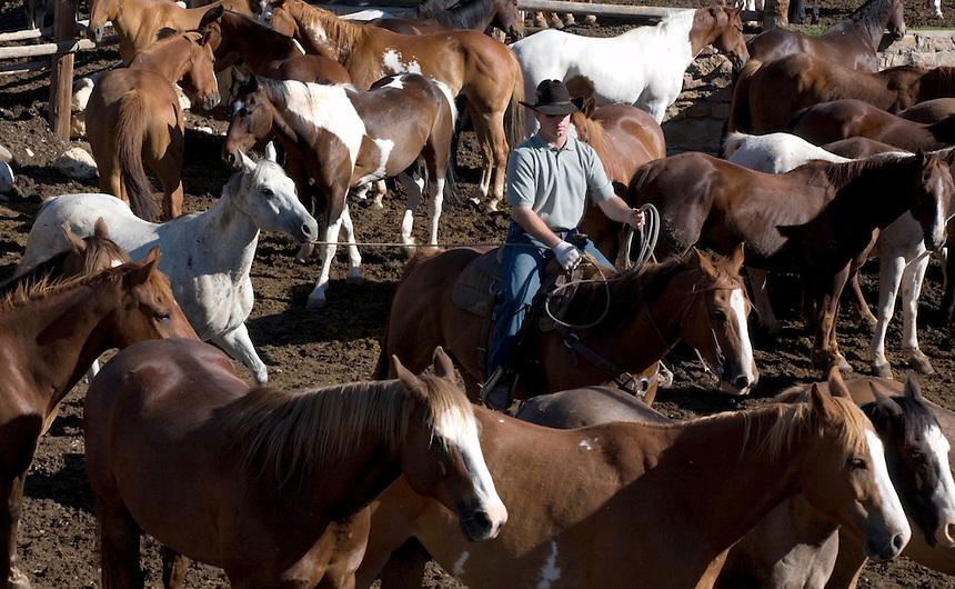 Stephen Brashear<br /> Eaton's Ranch in Wolf Wyo., June 14, 2005.