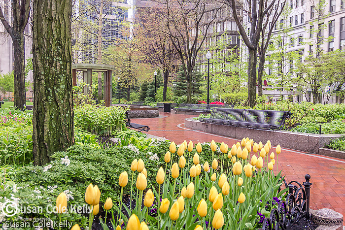 Tulips at the Norman J. Leventhal Park at PostOffice Square, Boston, Massachusetts, USA