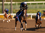 OCT 29: Breeders' Cup Filly & Mare Turf entrant Sistercharlie, trained by Chad C. Brown,  gallops at Santa Anita Park in Arcadia, California on Oct 29, 2019. Evers/Eclipse Sportswire/Breeders' Cup