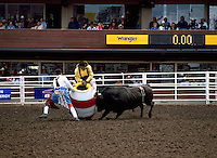 Angry Bull attacking Barrel and Rodeo Clowns at Calgary Stampede, Calgary, Alberta, Canada - Editorial Use Only