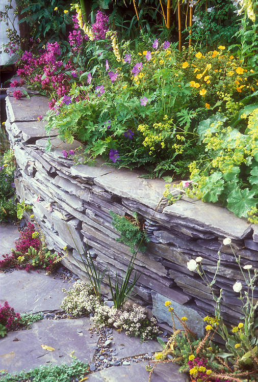 Herbs in crevices of stone path, thymes Thymus with raised bed stone wall garden, alchemilla mollis, digitalis, geraniums, mixture of plants including bamboo