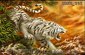 Kayomi, REALISTIC ANIMALS, REALISTISCHE TIERE, ANIMALES REALISTICOS, cute animals, lustige Tiere, animalitos diver, paintings+++++,USKH282,#A#,Tiger,fantasy,flames