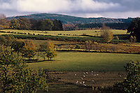 Europe/France/Limousin/19/Corrèze/Plateau de Millevaches/Env Meymac: Paysage