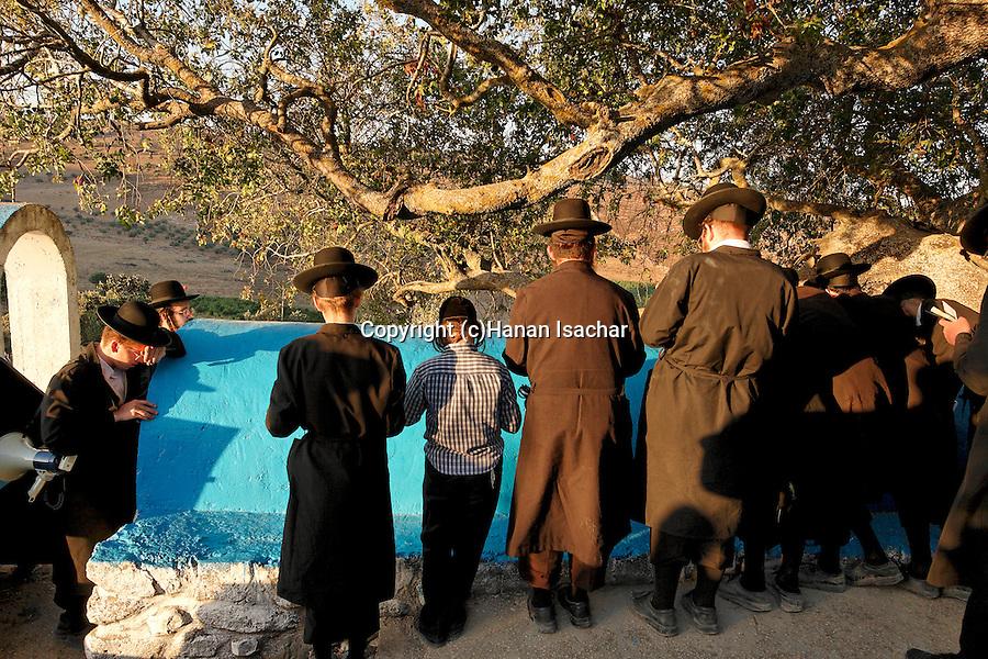Israel, the Upper Galilee. Atlantic Pistachio (Pistacia Atlantica) tree by the tomb of Rabbi Tarfon in Kadita<br />