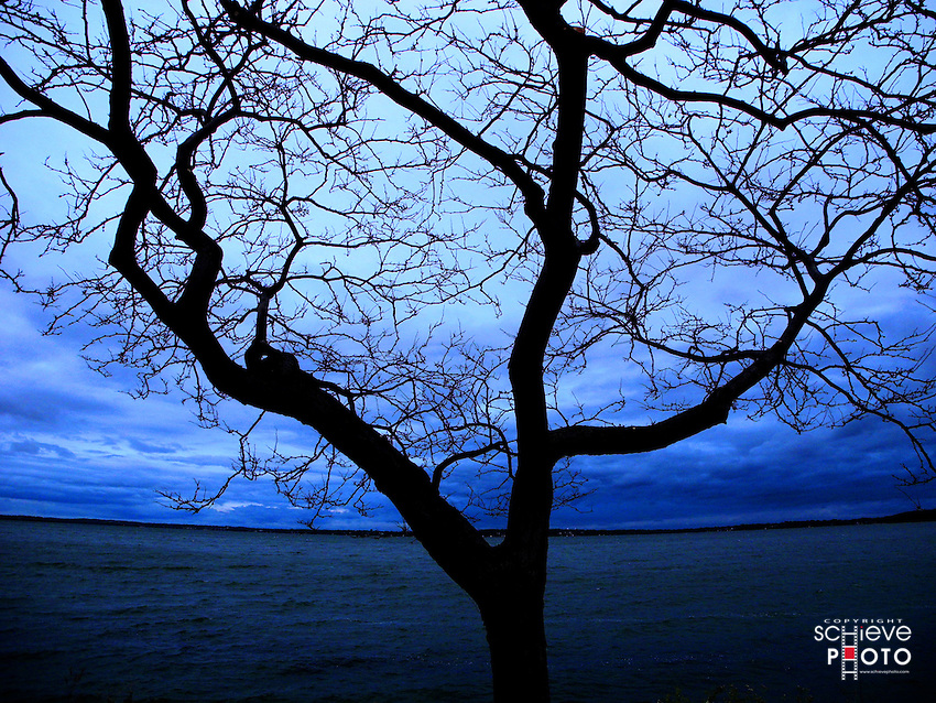Bare trees along the Lake Monona shore in Madison, Wisconsin.