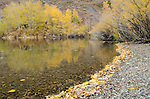 Fall colors along Convict Lake, Inyo National Forest, California