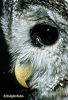 OW01-052z  Barred Owl - head close-up showing curved beak - Strix varia