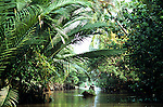 Mekong Delta Backwater 01 - Man paddling a small boat under palm fronds on a backwater of the Mekong river, Can Tho, Mekong Delta, SW Viet Nam