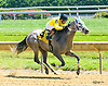 Not For Truth winning at Delaware Park on 7/31/17