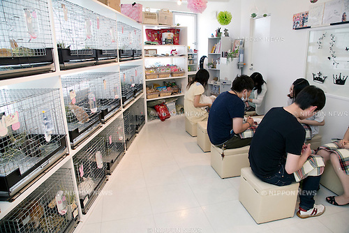 Ms bunny pet shop and cafe in tokyo nippon news for Living 3000 shop