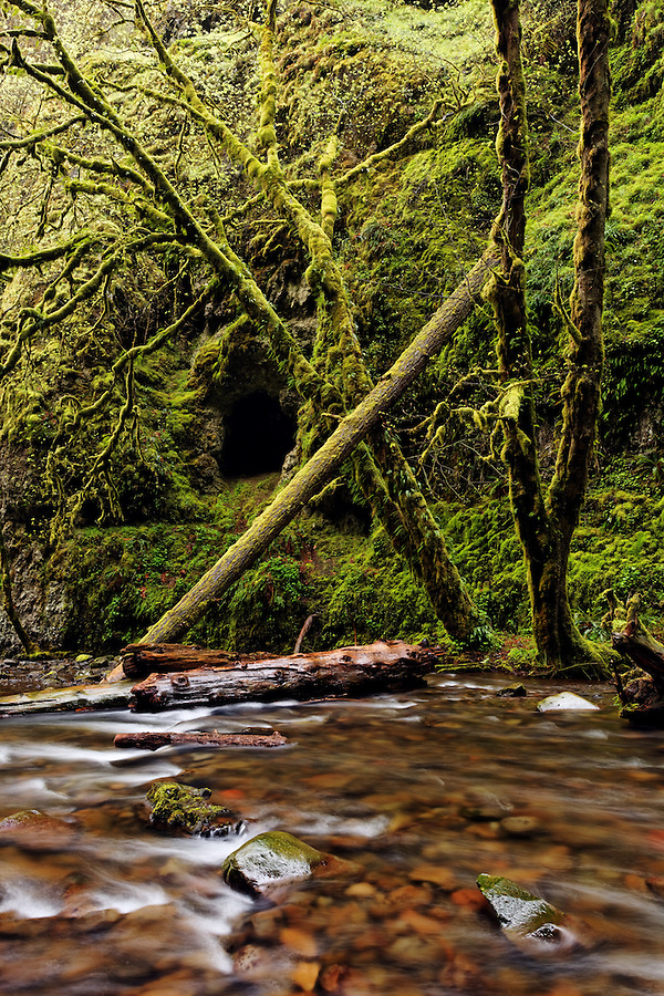 Oneonta Creek, Columbia River Gorge National Scenic Area, Oregon, USA