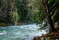 Stilliguamish River, Mount Baker-Snoqualmie National Forest