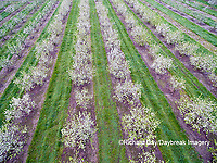 63801-11918 Apple orchard in spring-aerial  Marion Co. IL