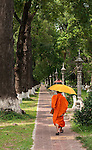 Buddhist Monk - Buddhist monk walking along a tree-lined path in Siem Reap, Cambodia