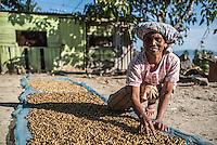 Indonesian woman sorting coffee beans, Lake Toba (Danau Toba), North Sumatra, Indonesia