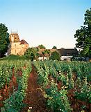 FRANCE, Aloxe-Corton, Burgundy, vineyard and Villa Louise in the small town of Aloxe-Corton