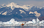 Alaska, Prince William Sound, solo Sea kayaker, Columbia Bay, Columbia Glacier, Icebergs, Brash Ice, Chugach Mountains, USA, David Fox, released,.
