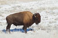 Montana<br /> 11/15/2014