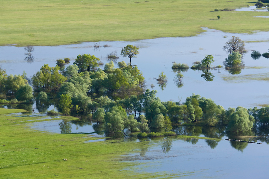 Flooded area in the Northern part of the Livansko Polje -  karst plateau: is arguably the largest karst field in the world. Ramsar site. In the flooded forest patch are: mainly white willow (Salix alba) and some white mulberry (Morus alba), aspen, poplar, ash.  Kazanc area. May 2009. Bosnia-Herzegovina.<br /> Elio della Ferrera / Wild Wonders of Europe
