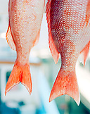 USA, Florida, red snapper, close-up, Islamorada